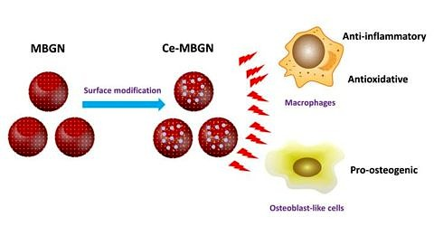 "Towards entry ""Our paper on multifunctional mesoporous glass nanoparticles published in Materials Today Bio"""